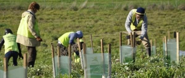 Высадка растений в Австралии