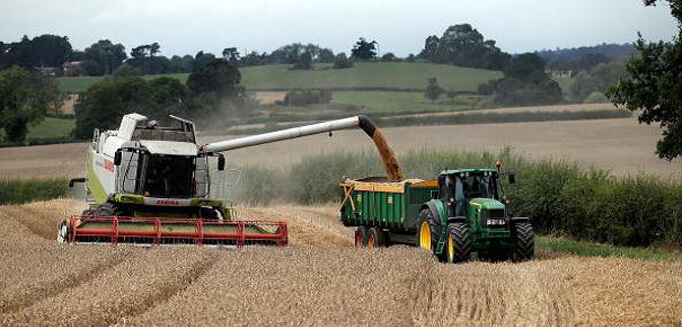 Сбор урожая пшеницы в Канаде